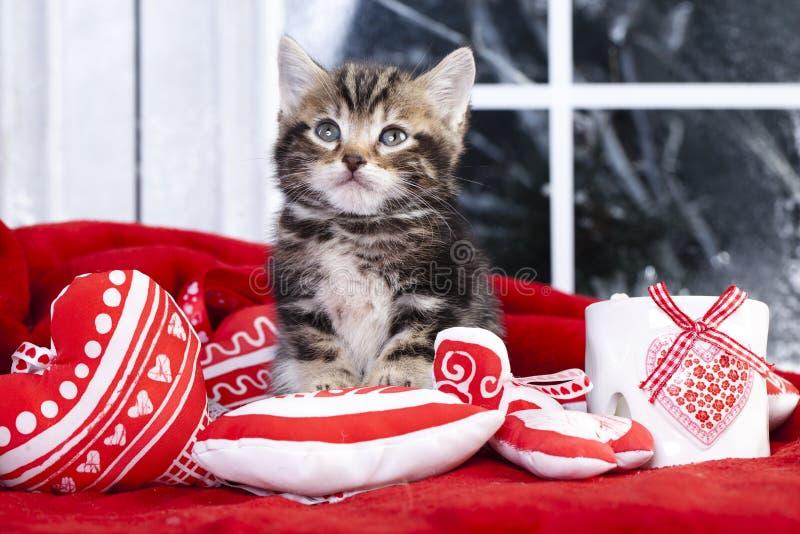 Pequeño amor del gatito fotografía de archivo libre de regalías