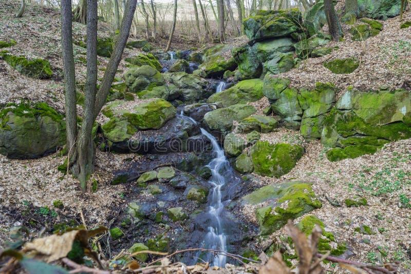 Pequeño arroyo salvaje de la corriente del bosque de la cascada imagen de archivo