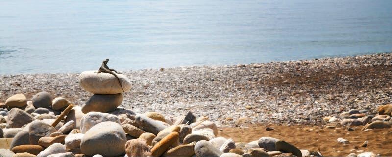 Pequeño asiento del lagarto en las piedras. foto de archivo libre de regalías