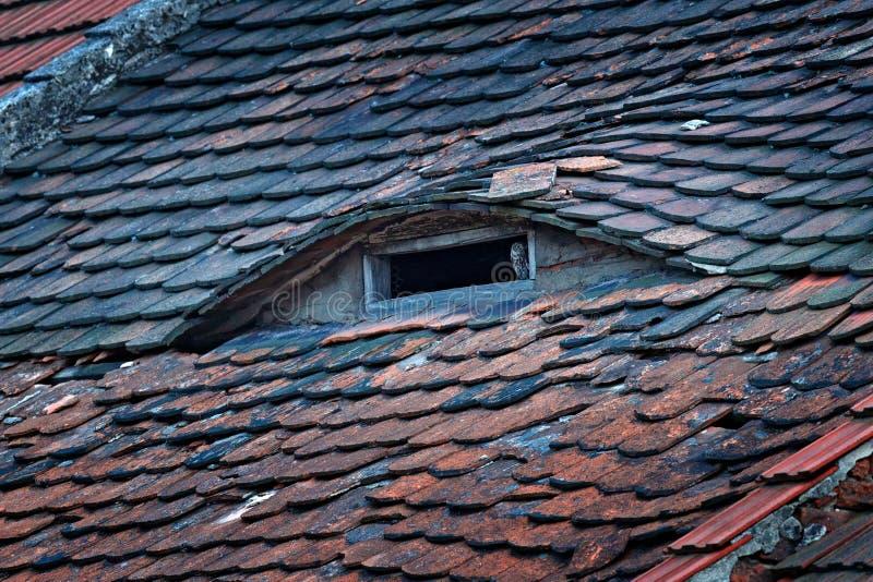 Pequeño búho, noctua del Athene, pájaro en teja de tejado vieja Fauna urbana, búho en la chimenea del tejado Pájaro con los ojos  imagen de archivo
