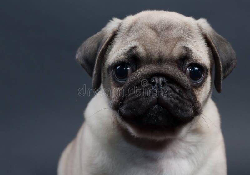 Pequeño barro amasado del perrito foto de archivo