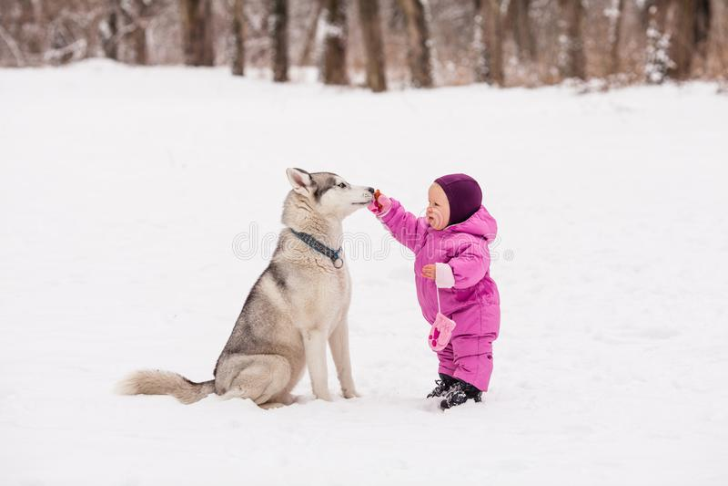 Pequeño bebé con el perro fornido imagenes de archivo