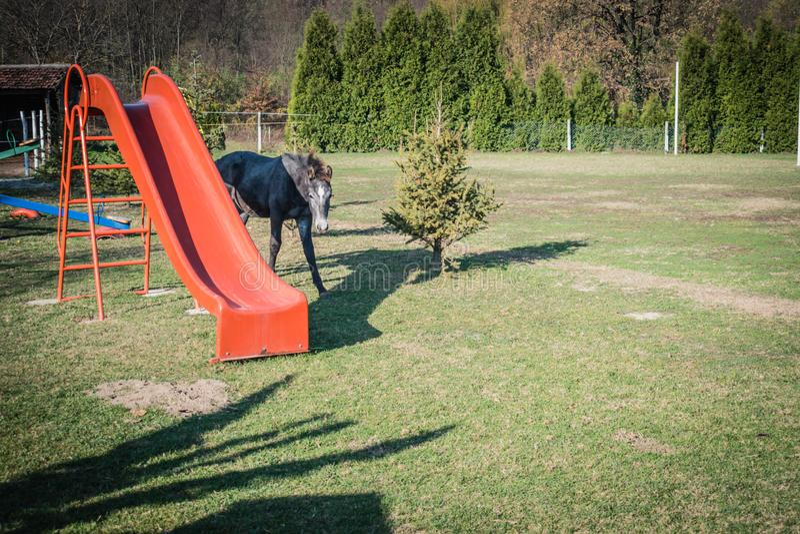 Pequeño caballo oscuro del bebé en patio de los niños fotos de archivo libres de regalías