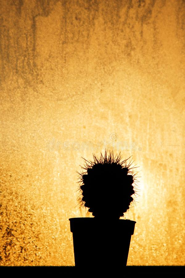 Pequeño cactus de la silueta en pote con la luz de la ventana foto de archivo