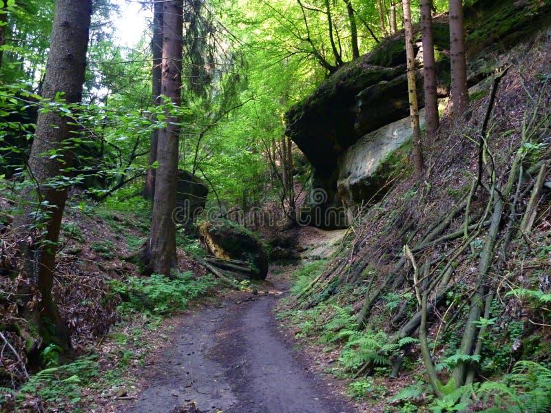 Pequeño camino arenoso a través de un bosque verde fotos de archivo