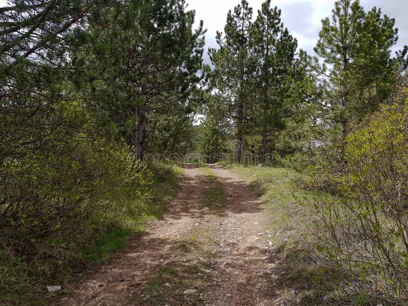 Pequeño camino del rastro en un bosque hermoso por la mañana imagen de archivo libre de regalías