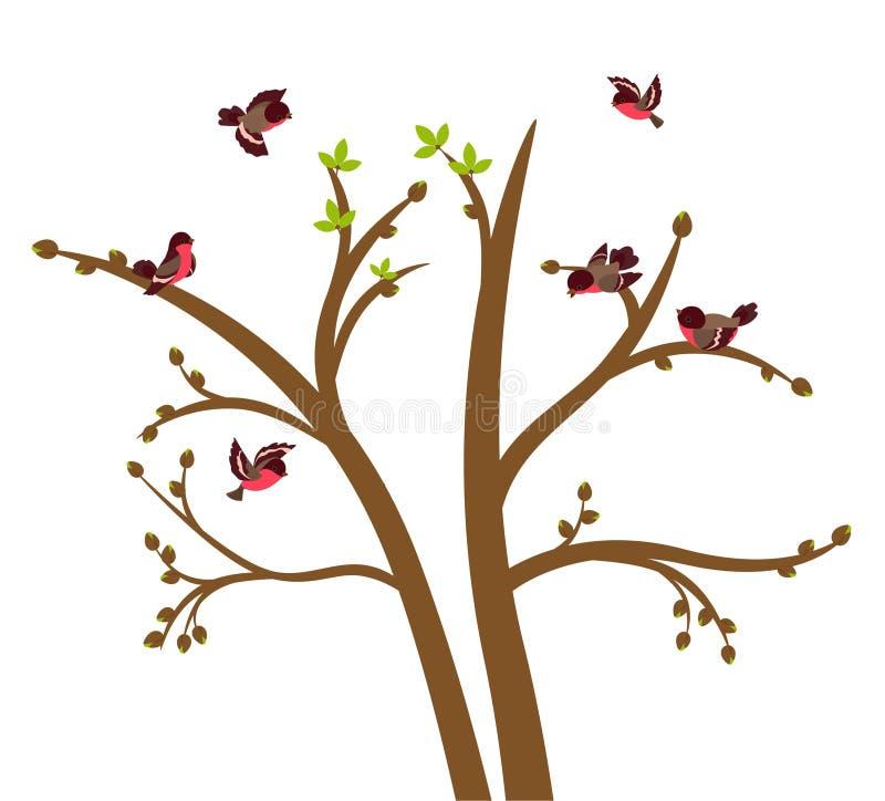 Pequeño chirrido de los pájaros en árbol del resorte ilustración del vector