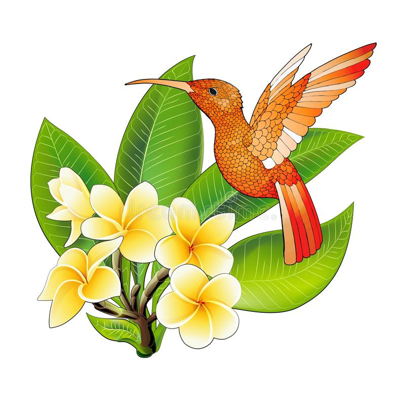 Pequeño colibrí con las flores del hibisco Icono animal del colibri tropical ex?tico foto de archivo