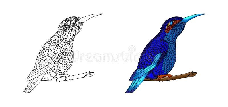 Pequeño colibrí Icono animal del colibri tropical exótico Plumas esmeralda de oro ilustración del vector