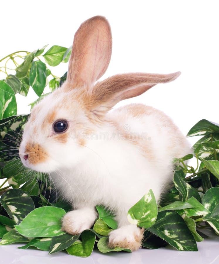 Pequeño conejito lindo en hojas verdes fotografía de archivo libre de regalías