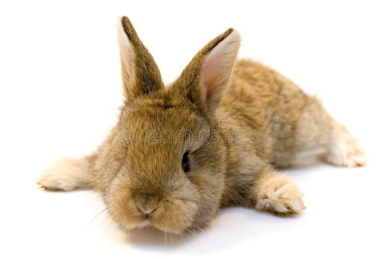 Pequeño conejo fotos de archivo