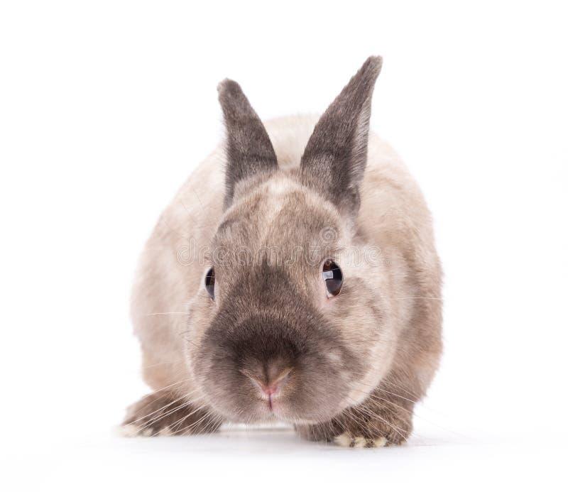 Pequeño conejo divertido fotos de archivo