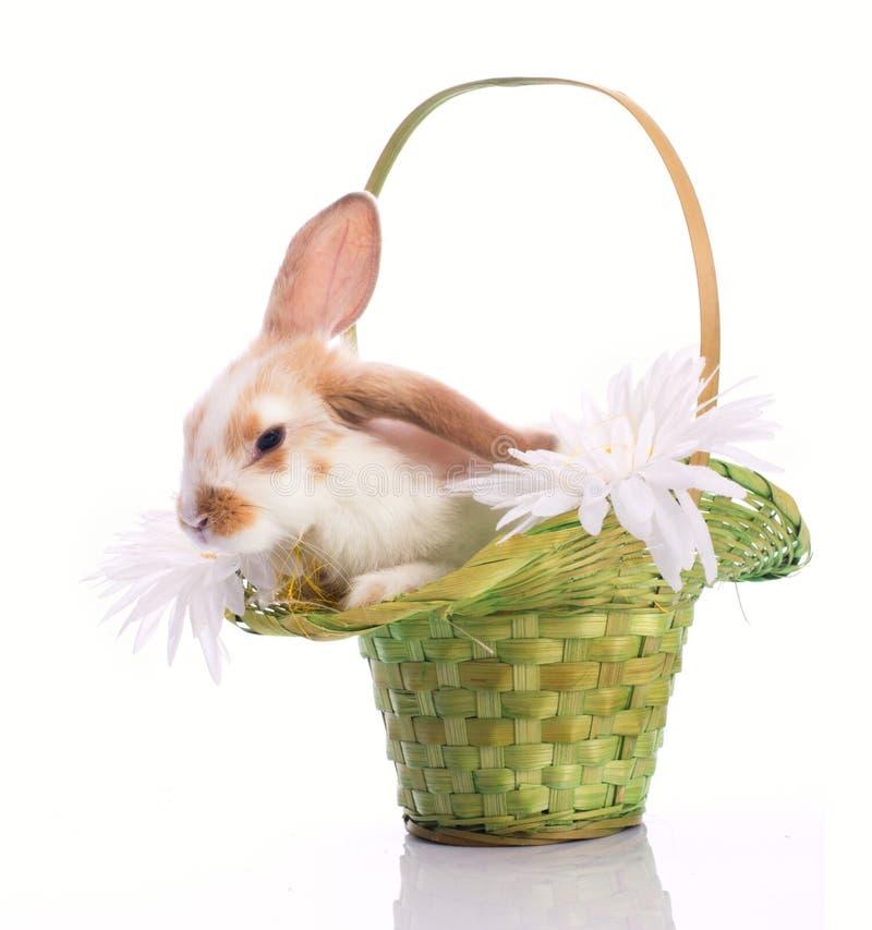 Pequeño conejo en cesta verde imagen de archivo