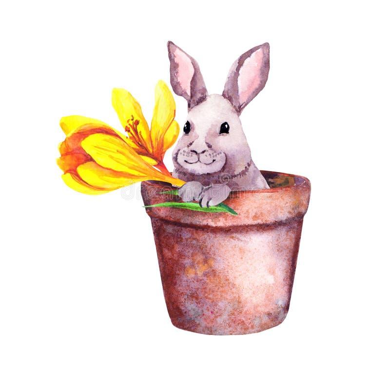 Pequeño conejo lindo en una maceta con las flores amarillas del azafrán Acuarela bonita con el conejito de pascua libre illustration