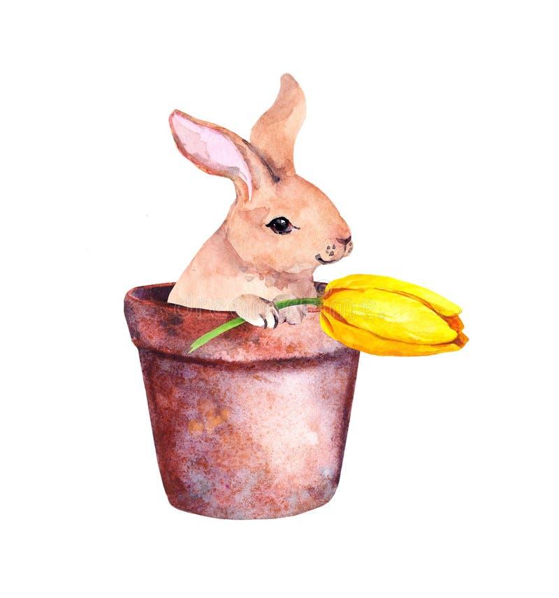 Pequeño conejo lindo en una maceta con las flores amarillas del azafrán Conejito de pascua bonito de la acuarela libre illustration
