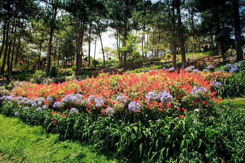 Pequeño crecimiento de flores rosadas y blancas maravilloso en parque imagenes de archivo