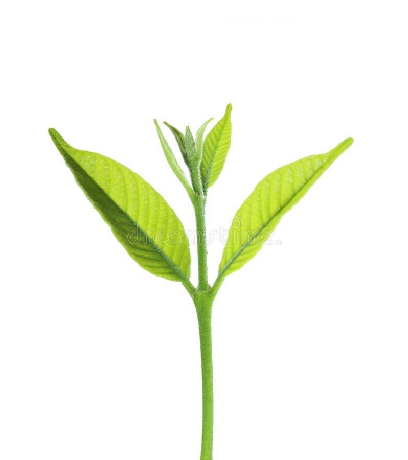 Pequeño crecimiento vegetal verde fresco del bosque imagenes de archivo