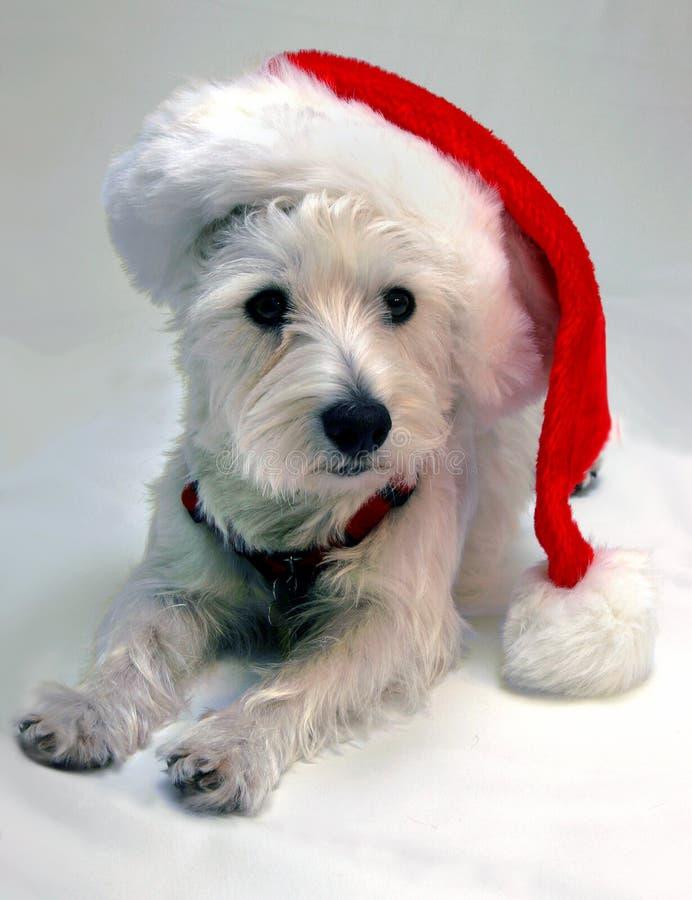 Pequeño duende de Santa foto de archivo