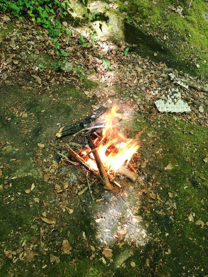Pequeño fuego en la madera fotos de archivo
