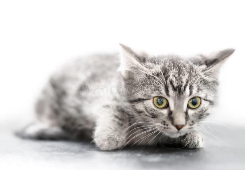 Pequeño gatito imagenes de archivo