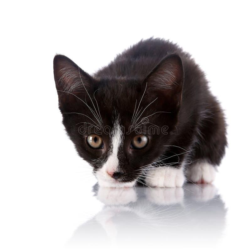 Pequeño gatito asustado blanco y negro imagen de archivo