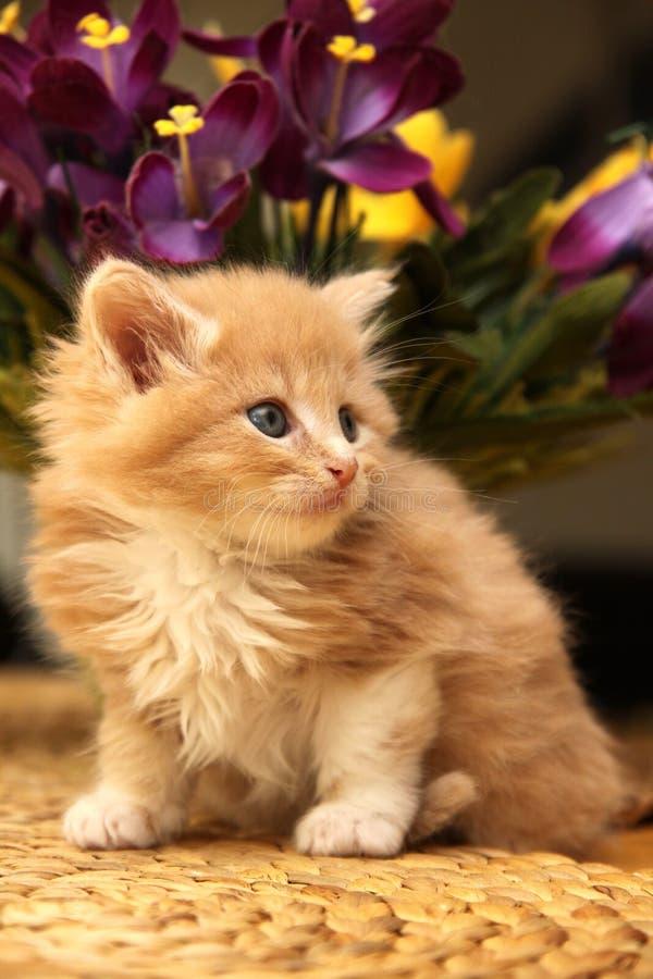 Pequeño gatito con las flores violetas imágenes de archivo libres de regalías