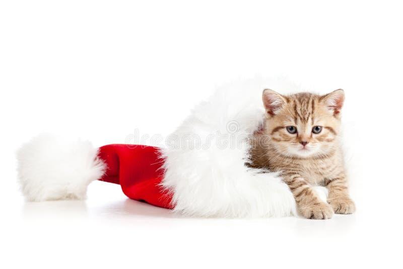 Pequeño gatito del gato en un sombrero de Papá Noel imagenes de archivo