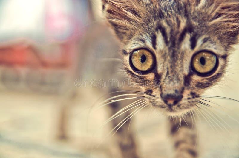 Pequeño gatito divertido con los ojos grandes - cartel fotografía de archivo libre de regalías