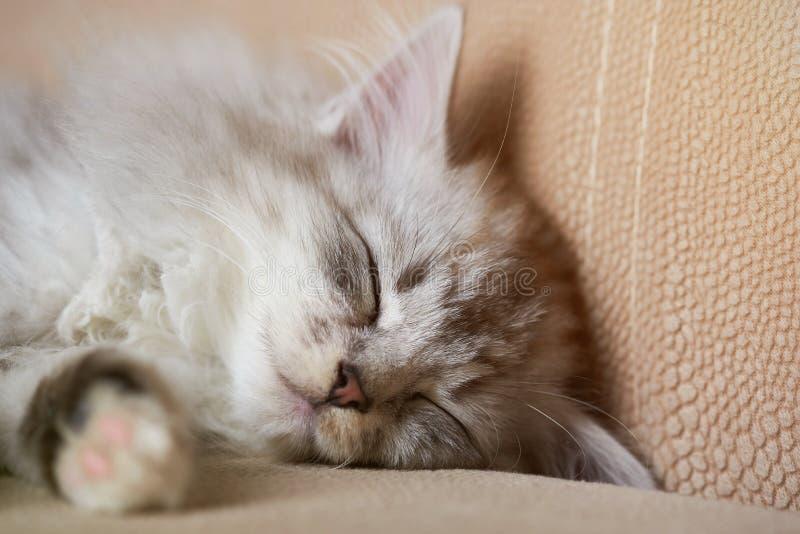 Pequeño gatito el dormir imágenes de archivo libres de regalías