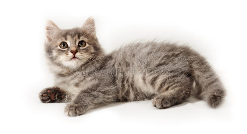 Pequeño gatito en blanco imagenes de archivo