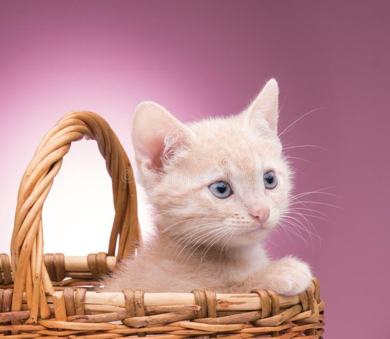 Pequeño gatito en la cesta imagenes de archivo