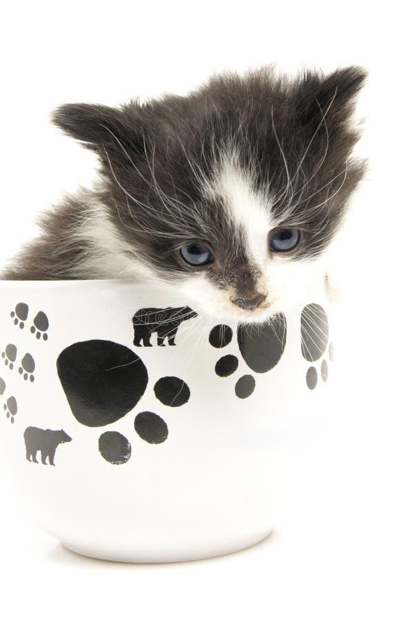 Pequeño gatito en la taza. fotografía de archivo
