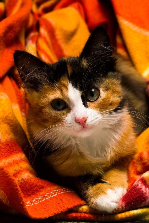 Pequeño gatito en una luz del estudio de la manta fotos de archivo libres de regalías