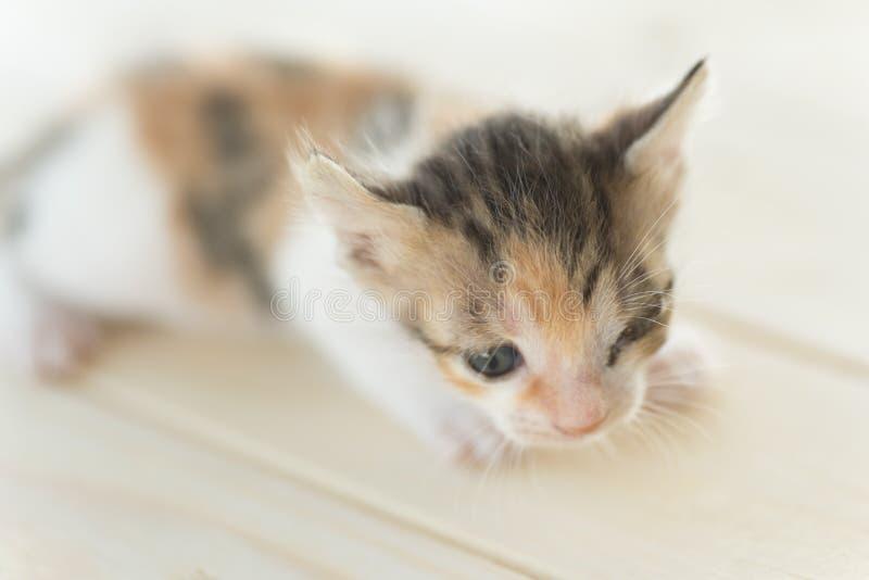 Pequeño gatito enfermo foto de archivo