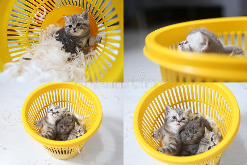 Pequeño gatito entre las plumas blancas, multicam, pantalla de la rejilla 2x2 foto de archivo libre de regalías