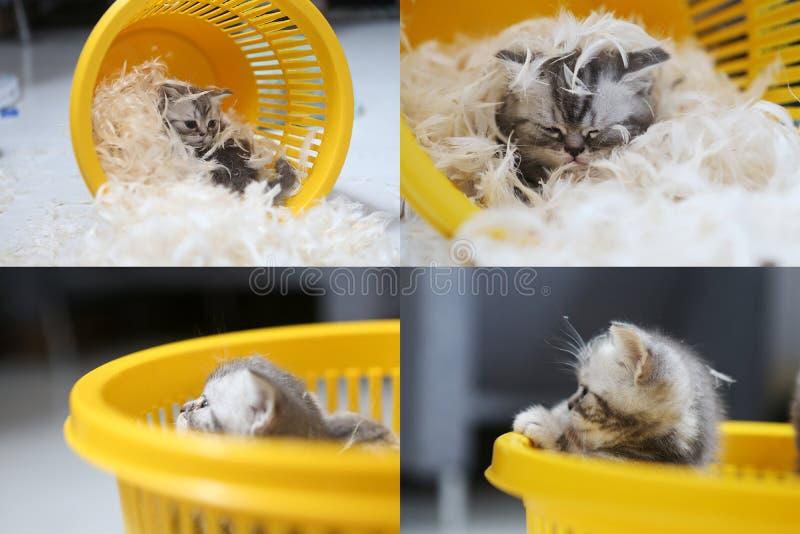 Pequeño gatito entre las plumas blancas, multicam, pantalla de la rejilla 2x2 foto de archivo