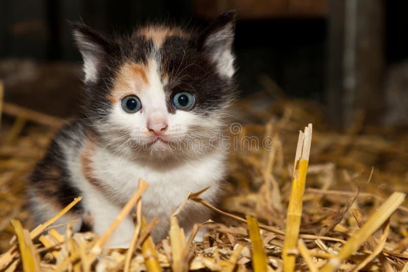 Pequeño gatito inocente fotos de archivo libres de regalías
