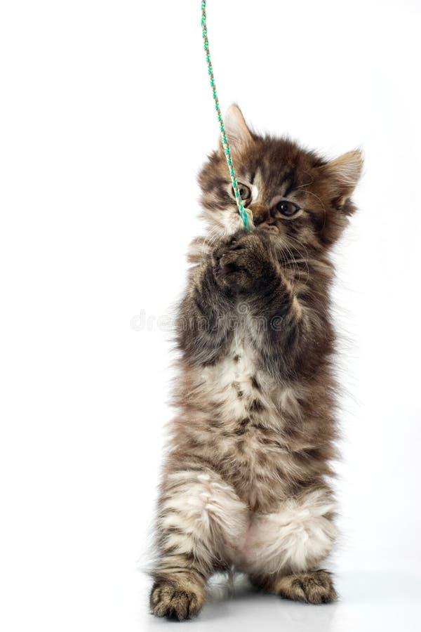 Pequeño gatito juguetón imagenes de archivo