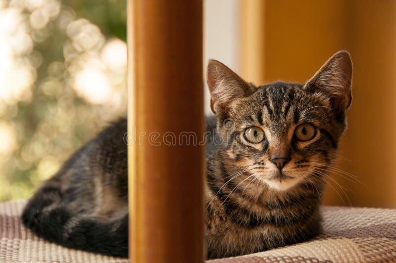 Pequeño gatito juguetón fotos de archivo