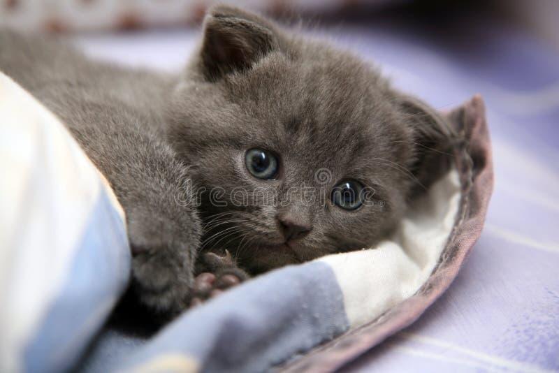 Pequeño gatito lindo imagenes de archivo