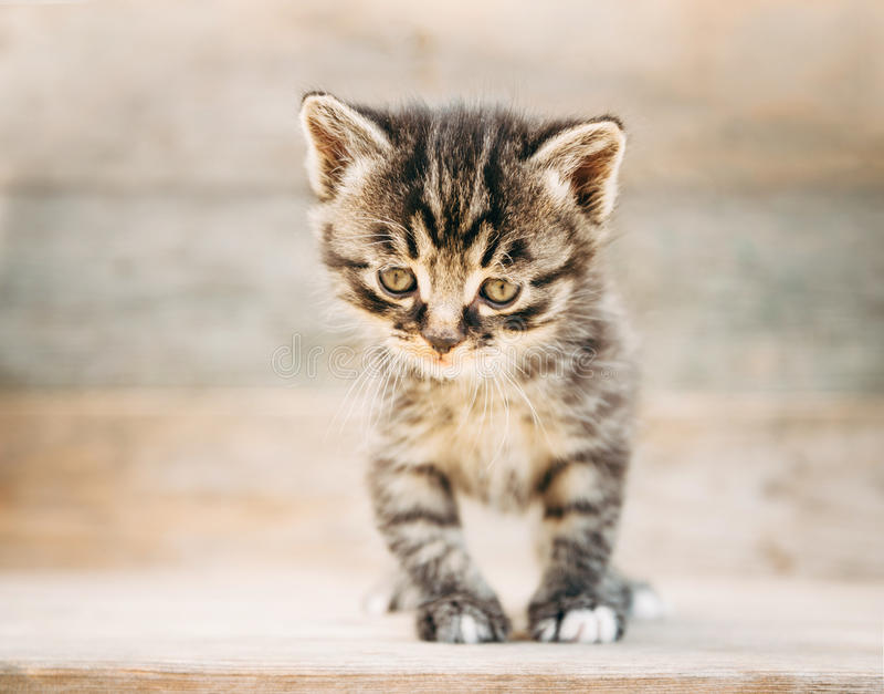 Download Pequeño gatito lindo foto de archivo. Imagen de felino - 41916090