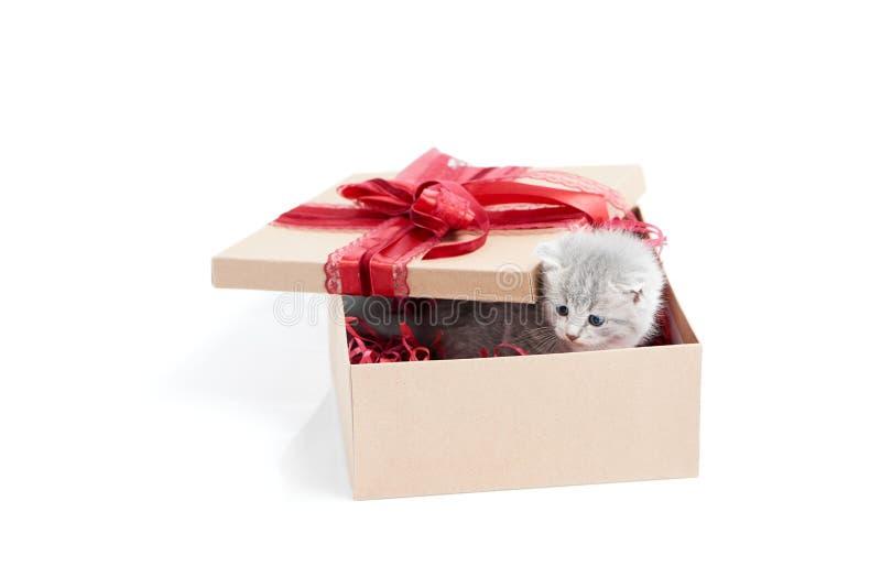 Pequeño gatito lindo mullido gris que se sienta dentro de la caja de cartón con la caja roja del cumpleaños en el top que está pr foto de archivo libre de regalías