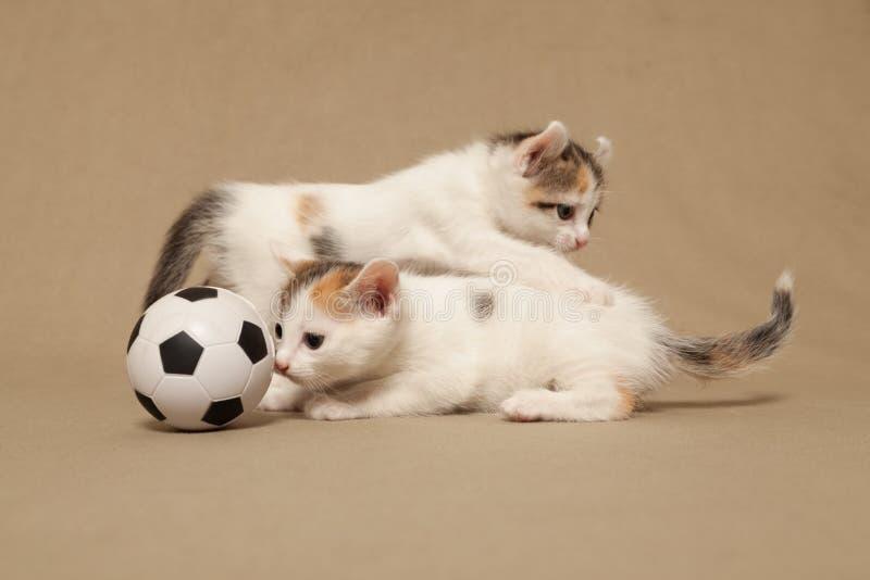Pequeño gatito manchado dos imagen de archivo libre de regalías