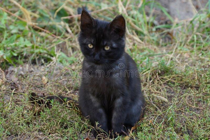 Pequeño gatito negro que se sienta en hierba verde en la calle imágenes de archivo libres de regalías