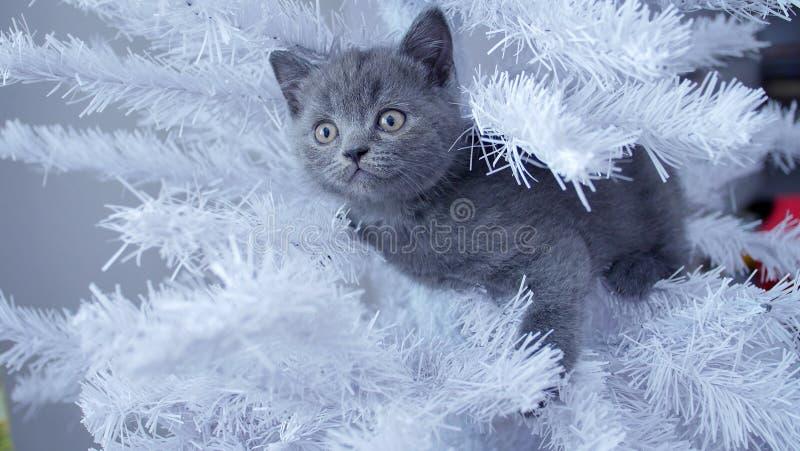 Pequeño gatito para arriba en un árbol de navidad fotografía de archivo