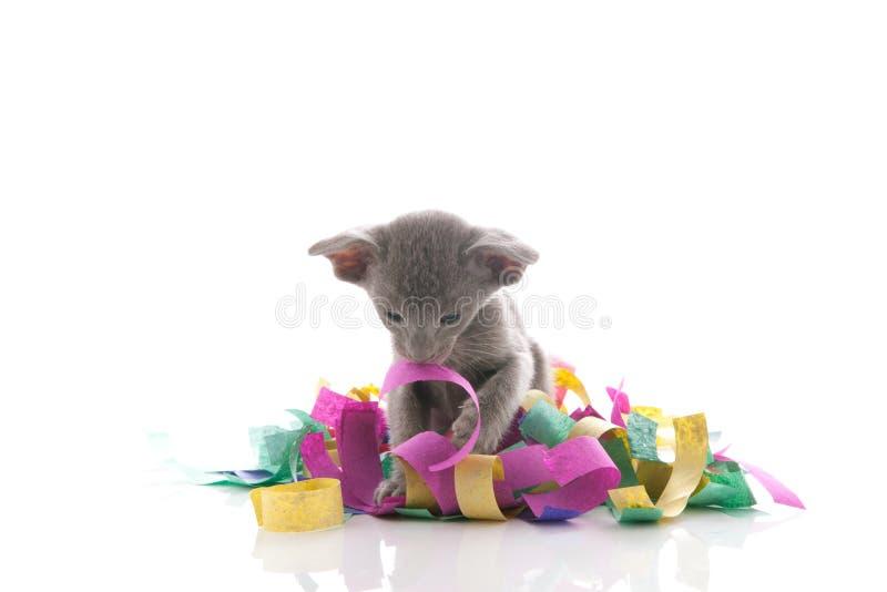 Pequeño gatito que juega con confeti foto de archivo