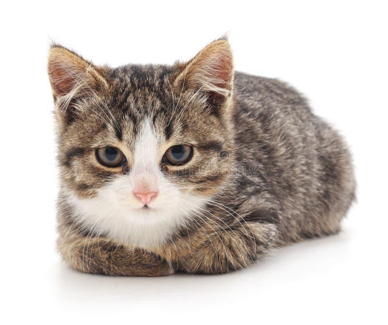 Pequeño gatito que miente foto de archivo libre de regalías