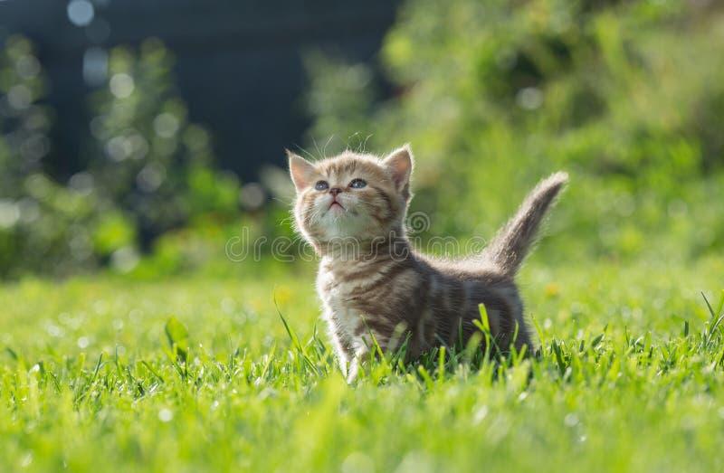 Pequeño gatito que mira para arriba en hierba verde fotos de archivo libres de regalías