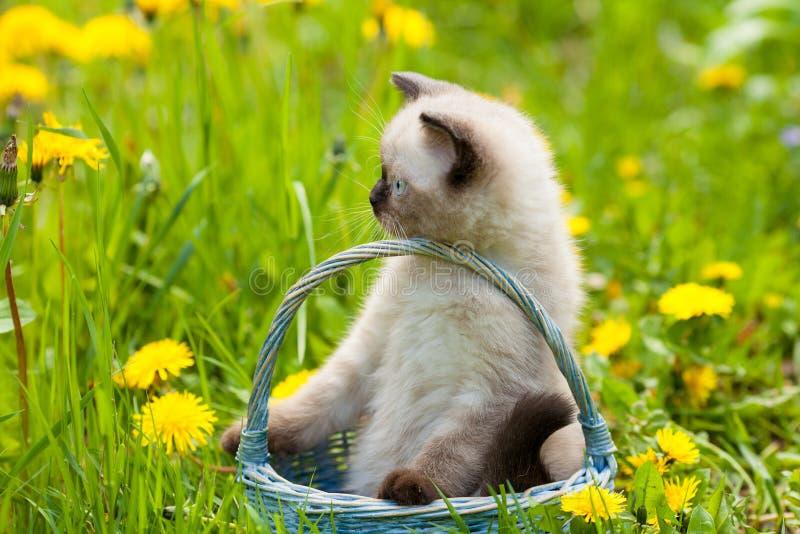 Pequeño gatito que se sienta en una cesta en el césped del diente de león foto de archivo libre de regalías