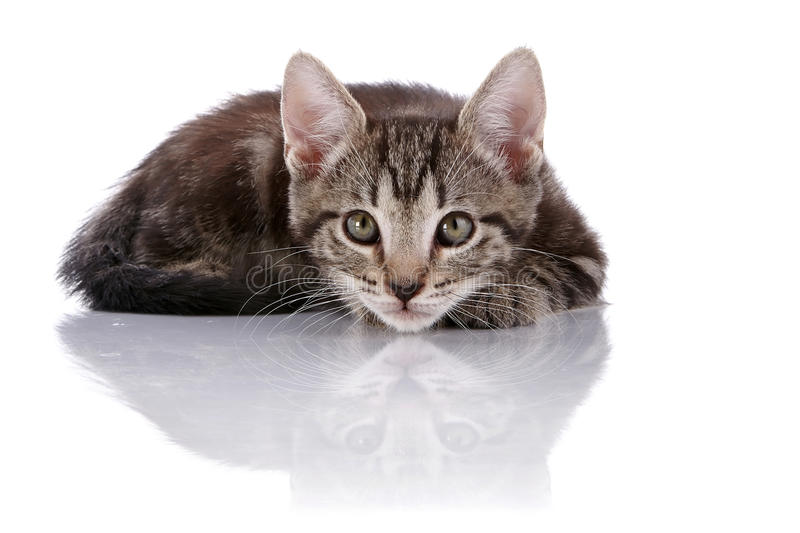 Pequeño gatito rayado ocultado fotos de archivo